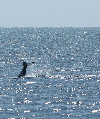 海と鯨.jpg