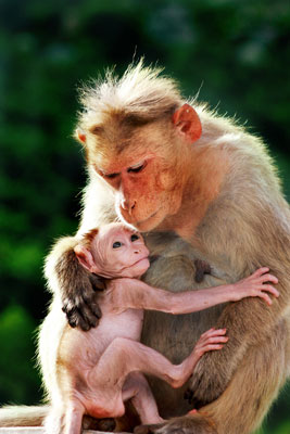 猿のおやこ.jpg