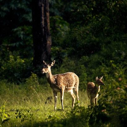 鹿の母子.jpg