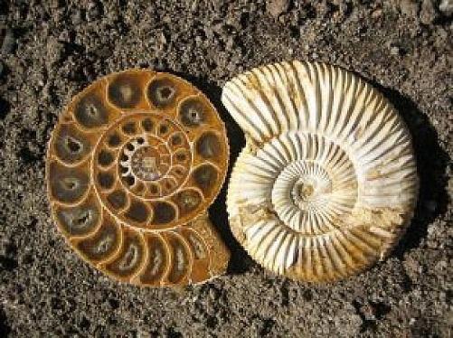 fossil-1_2760038.jpg