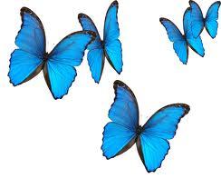 blue_butterflies_7xiz.jpg