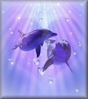 dolphins2a.jpg
